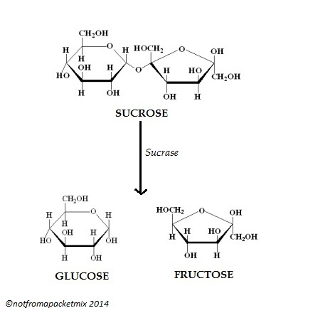 The isomers glucose and fructose combine to form the disaccharide sucrose, which is 1:1 glucose to fructose.