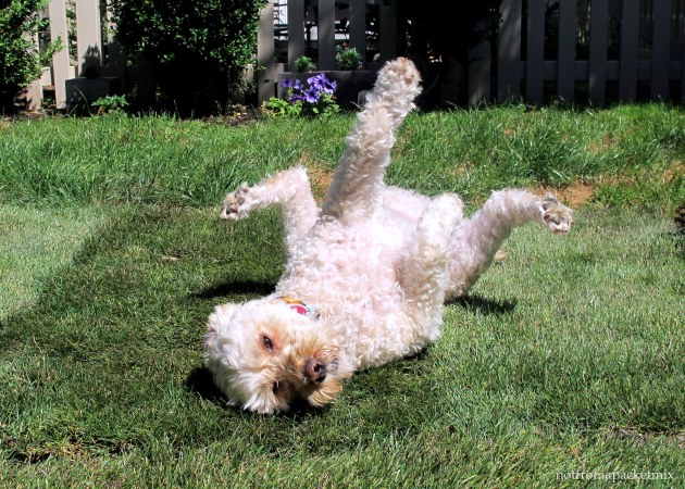 Baily, rolling in the sun