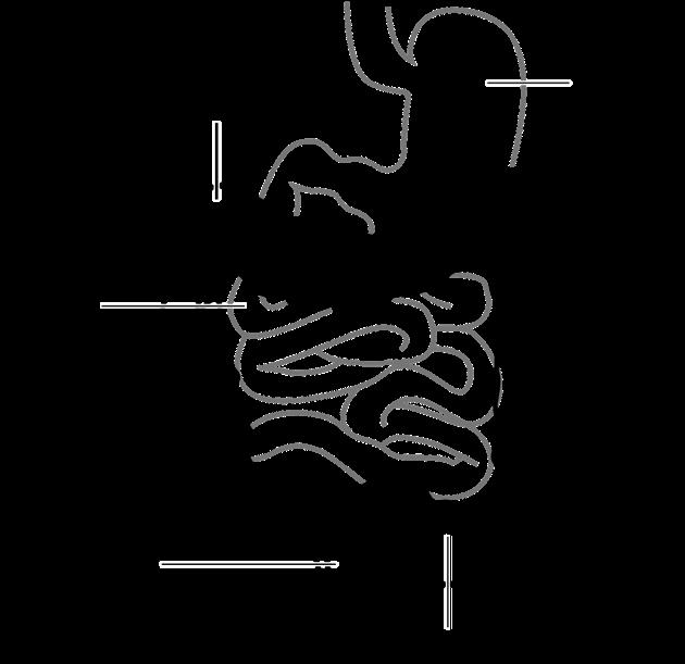 diagram-41638_1280
